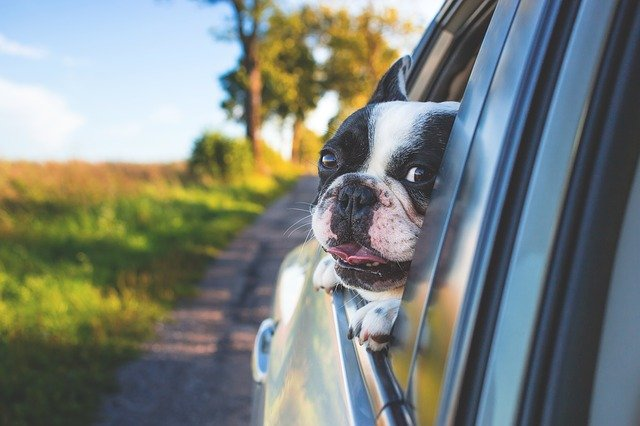 Traveling with pets can be very stressful. Therefore, certain steps and precautions should be taken before traveling