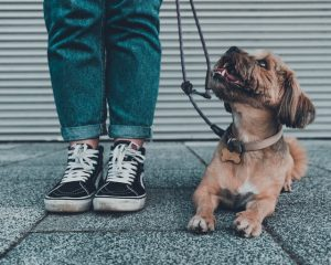 Training a dog to walk on a leash is an important part of their training